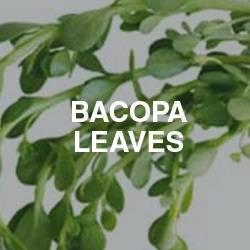 Bacopa Leaves