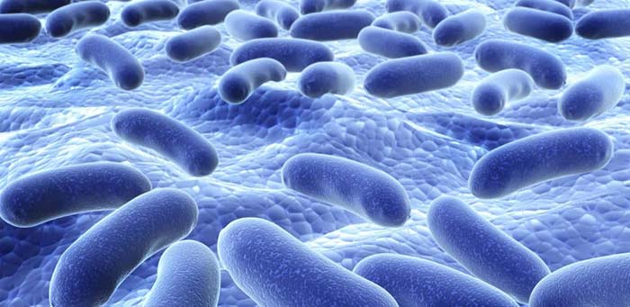 probiotics and gut bacteria