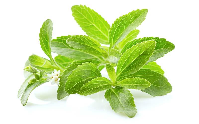 Stevia leaf aka Stevia rebaudiana