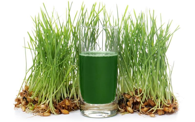Grasses in green powders