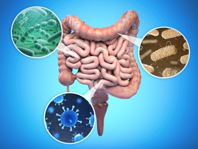 Types of gut bacteria