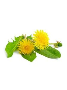 Dandelion Leaf Extract