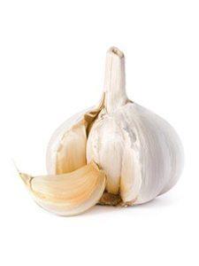 Garlic Bulb Extract